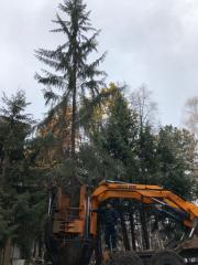 Механизированная пересадка деревьев (Пересадка крупномеров)