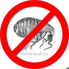 Extermination of fleas, fight against fleas
