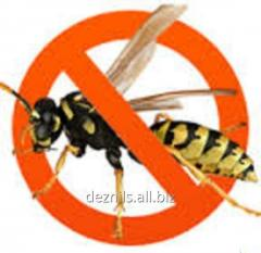 Extermination of wasps in Almaty