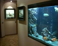 Service of aquariums.
