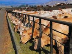 Кормление животных,животноводство