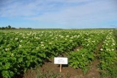 Семеноводство сельскохозяйственных культур