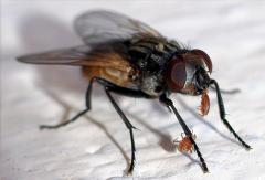 Extermination of flies, Almaty, in Almaty