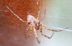 Extermination of spiders, Almaty, in Almaty