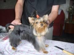 Услуги грумера, парикмахера для животных.