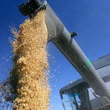 Grain shipment by railway cars