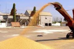 Shipment of grain crops