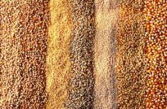 Выращивание кормовых культур