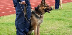 Охрана с собаками