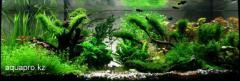 Production of aquariums