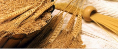 Processing of grain in Zheskazgana