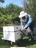 Индивидуальная селекция пчел с проверкой по потомству