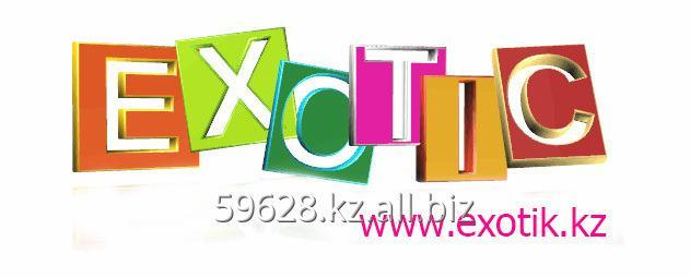 kompaniya_exotic