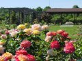 Проектирование, посадка цветников