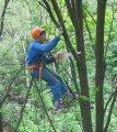Удаление аварийных деревьев