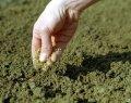 Посев семенного газона