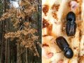 Борьба с вредителями, жук-короед, в Алматы