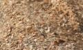 Брикетирование древесных стружечных отходов, Опилки древесные, стружка, загрязненные маслами