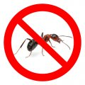 Extermination of ants in Almaty