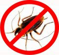Extermination of cockroaches in Almaty