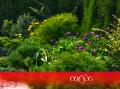 Создание цветочных клумб. Цветники