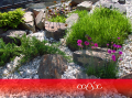 Создание рокария. Каменный сад