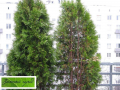 Оказание помощи больным растениям