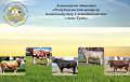 Услуги по искусственному осеменению коров и телок, Искусственное осеменение крупного рогатого скота