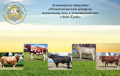 Осеменение коров, телок, породы молочного направления продуктивности, породы мясного направления продуктивности