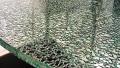 Стеклопакет Безопасный (из закаленного стекла либо триплекса)