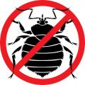 Destruction of bugs of Almaty