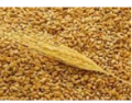 Развитие экспорта зерна