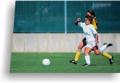 Тафтинговые покрытия для футбольных полей(искусственный травяной газон)