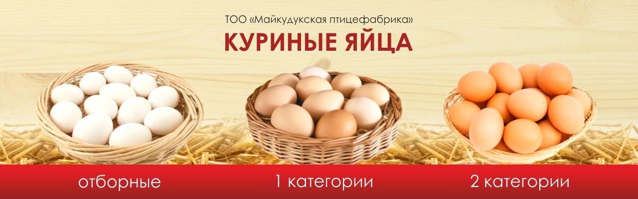 Majkudukskaya pticefabrika, TOO