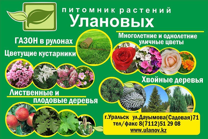 Питомник растений  Уланов, Крестьянское хозяйство.